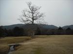 奈良公園02