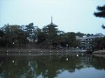 興福寺02